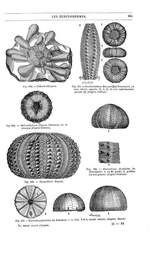 La terre. , La terre avant l'apparition de l'homme : (Éd.1893) - Fernand Priem